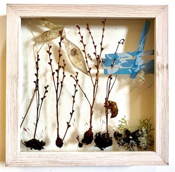Beechdrop, seed pods, cyanotype wall hanging