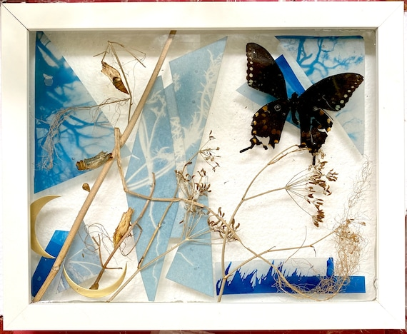 Entanglement; swallowtail lifecycle collage
