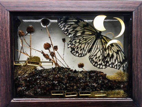 Paper kite butterfly, moss, and brass wall hanging