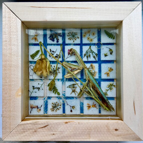Real praying mantis and botanical mosaic wall hanging