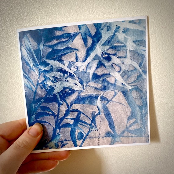 Amsonia cyanotype card