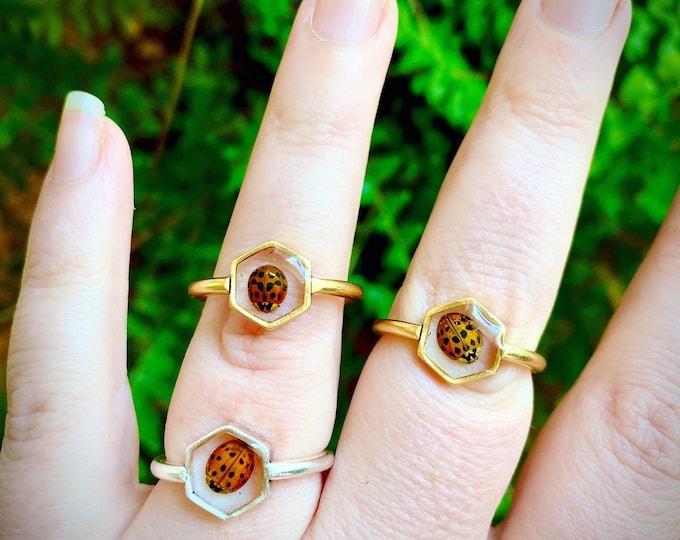 Real ladybug hexagon rings