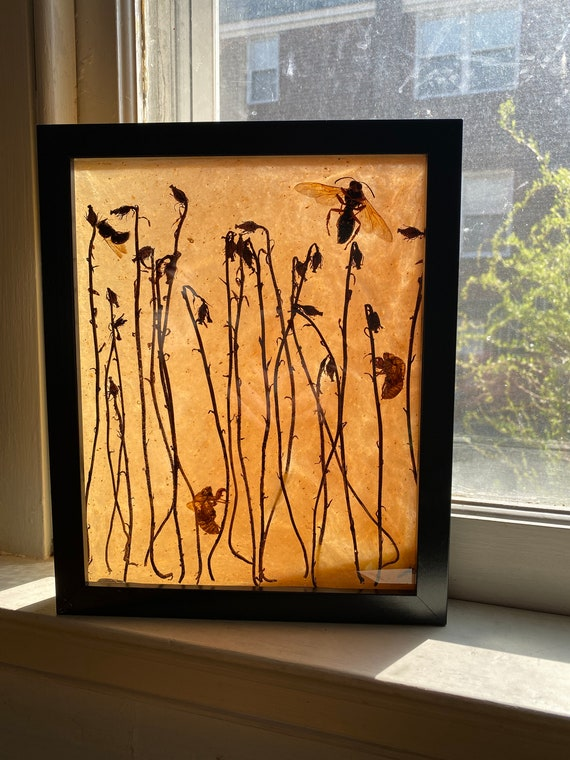 Ghost plant resin collage
