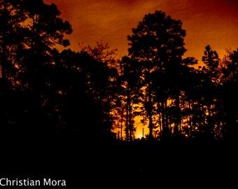 Sunset Photograph 1