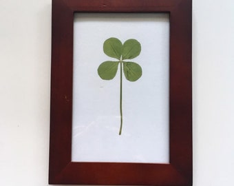 610d353fbc1 Real LARGE Four Leaf Clover in Mahogany Wooden Frame - Wedding Gift