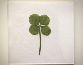 e183426b1fa Real Four Leaf Clover Fridge Magnet