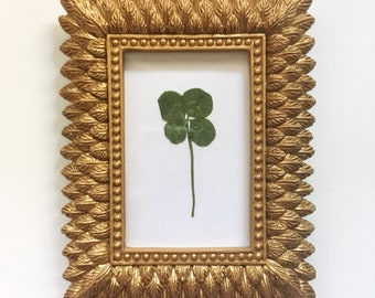 4bd6c59d51b Real Four Leaf Clover in Small Gold Feather Frame - Wedding Gift - Good  Luck Charm