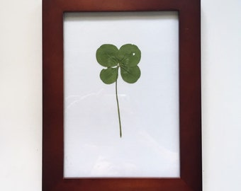 c2688a20f5d Real JUMBO Four Leaf Clover in Mahogany Wooden Frame - Wedding Gift