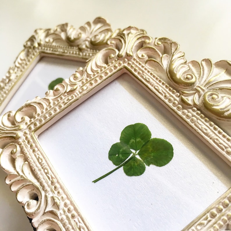 b34e607a433 Real Four Leaf Clover in Small White Baroque Frame Wedding