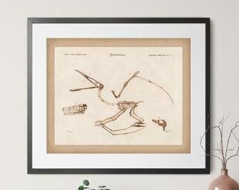 1892 Antique Dinosaur Print - Vintage Dinosaur Art, Paleontology Gift, Dino Print, Dinosaur Fossil Print, Fossil Art, Pterodactyl, Jurassic