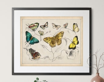 1820 Antique Butterfly Print - Vintage Insect Art, Entomologist Gift, Bug Print, Insect Print, Bug Art, Butterfly Art, Bathroom Wall Art