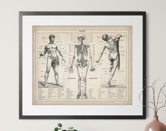 1900 French Human Anatomy Print - Vintage Anatomy Wall Art, Skeleton Art, Body Parts Art, Antique Medical Poster, Anatomy Chart, Nurse Gift
