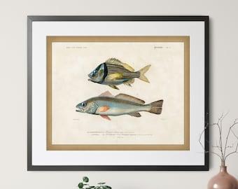 1892 Antique Fish Print - Vintage Fish Art, Fishing Gifts for Men, Saltwater Fish Wall Decor, Fisherman Gift, Gifts for Dad, Fish Wall Art
