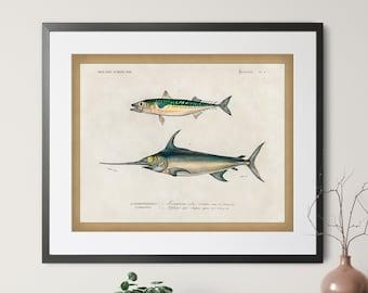 1892 Antique Fish Print - Vintage Fish Art, Fishing Gifts for Men, Fish Wall Decor, Fisherman Gift, Mackerel Swordfish, Gifts for Dad,