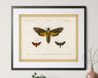 1892 Antique Moth Print - Vintage Insect Art, Entomologist Gift, Bug Print, Insect Print, Bug Art, Moth Art, Entomology Illustration Poster