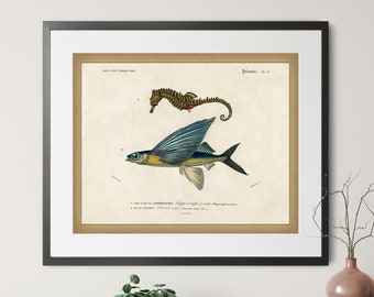 1892 Antique Fish Print - Vintage Fish Art, Fishing Gifts for Men, Flying Fish Wall Decor, Fisherman Gift, Seahorse Print, Gifts for Dad