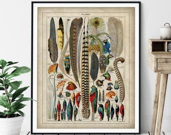 Antique Bird Feathers Print - Vintage Bird Art, French Wall Art, Bird Watcher Gift, Tropical Bird Art, Bird Lover Gift, Bird Chart Poster