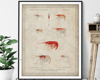 Antique Shrimp Print - Vintage Prawn Art, Ocean Marine Life Wall Art, Oceanography Gift, Saltwater Animal Wall Decor, Fisherman Gift