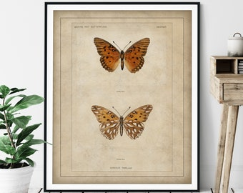 1900 Antique Butterfly Print - Gulf Fritillary, Vintage Insect Art, Entomologist Gift, Bug Print, Insect Print, Bug Art, Bathroom Wall Art