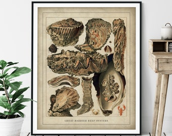 Antique Oyster Print - Vintage Great Barrier Reef Art, Ocean Marine Life Wall Art, Oceanography Gift, Sea Animal Wall Decor, Fisherman Gift