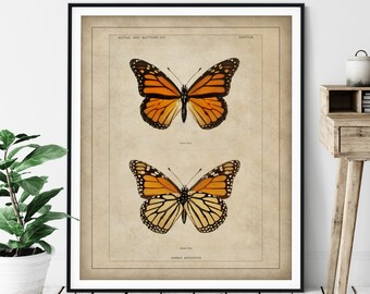 1900 Antique Monarch Butterfly Print - Vintage Insect Art, Entomologist Gift, Bug Print, Insect Print, Bug Art, Bathroom Wall Art, Specimen