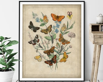 1882 Antique European Butterfly Print - Vintage Insect Art, Entomologist Gift, Bug Print, Insect Print, Bug Art, Bathroom Wall Art, Specimen
