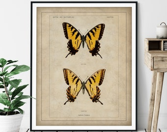 1900 Antique Eastern Tiger Swallowtail Butterfly Print - Vintage Insect Art, Bug Print, Insect Print, Bug Art, Bathroom Wall Art, Specimen