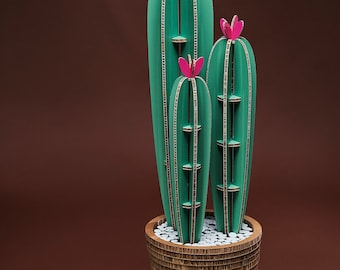 San Pedro Cactus XL