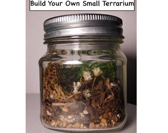 Build your own Small Tiny Terrarium in a Jar Eco System Moss Flowers Nature DIY