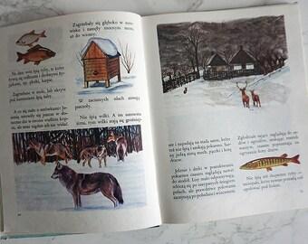 Vintage Illustrated Book   Children's Book   Illustrated Book