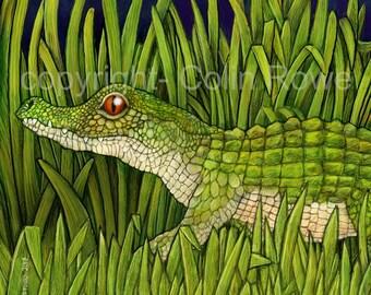 Baby Croc. A Giclee Limited edition artprint.