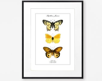 Vintage Yellow Butterfly Print, Nature Wall Art, Antique Insects Illustration,