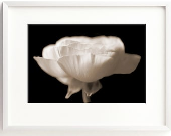 Poppy Print, Floral Wall Art, Black and White Art, Flower Photograph, Fine Art Print, Nature Print, Bedroom Wall Art, Botanical Print, Sepia