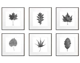 Large Botanical Prints, Leaf Art Prints, Botanical Wall Art, Set of 6 Prints, Large Wall Art, Black and White Set, Nature Print Set