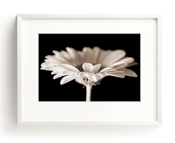 Gerbera-Druck Blume Wandkunst schwarz-weiß-Druck Foto
