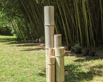 """48"""" See WARNING! 1"""" 2"""" 3"""" 4"""" 5"""" Green Giant Large Moso Bamboo Poles Pieces 48"""" Lengths (4 Feet) 100% Grown Made in USA Green ECO Sustainable"""