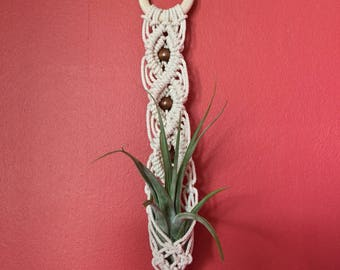 Macrame air plant holder, WITH airplant, Tillandsia hanger, macrame wall hanging, indoor planter