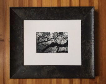 "Framed Black and White Silver Gelatin Photograph Print ""Muir Woods"""