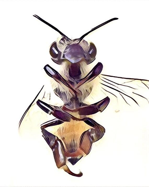 Honeybee Anatomy Print Etsy