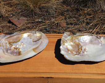 Oyster Shells with Pearls / Shell Decor / Real Pearls / Shell Dish with Pearls