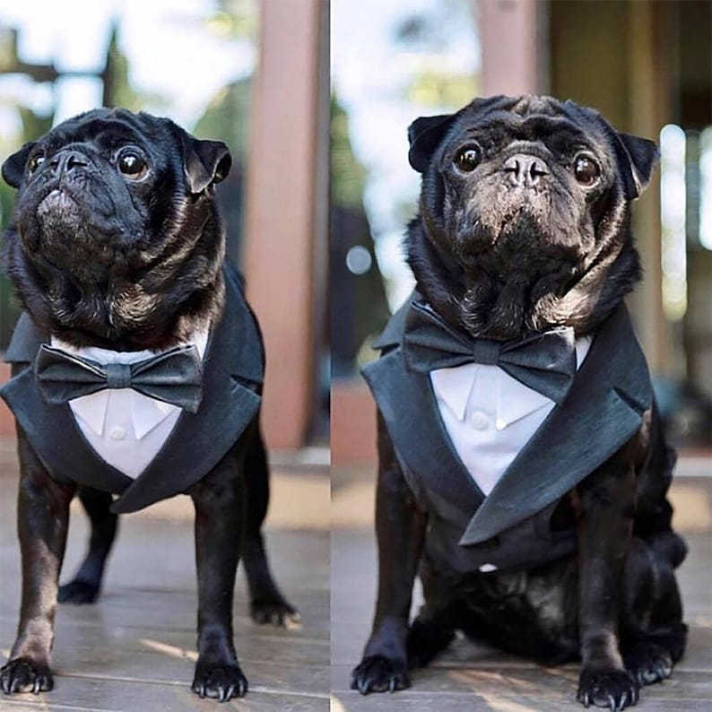 Formal dog Tuxedo harness wedding tuxedo for dogs custom image 0