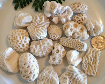 Fossil Coral Rocks, Natural White Coral Fossils, Very Old Fossils, Bulk Small Fossils, Aquarium Decor, Embedded Coral Rocks, Fish Tank Decor