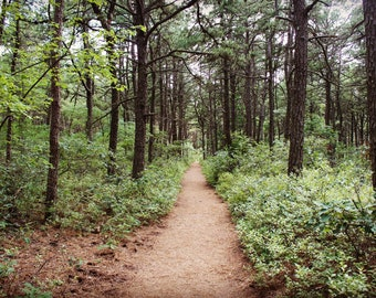 Digital download: Picture of trail in woods