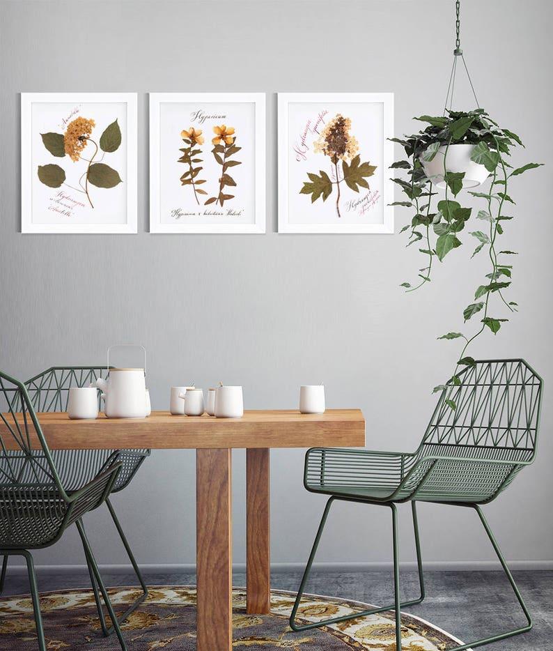 Pressed flower art  Dried Annabelle hydrangea botanical print  1st anniversary gift for her