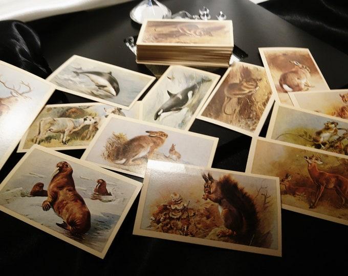 Vintage cigarette cards, Players animals collectable cigarette cards, large selection, vintage advertising