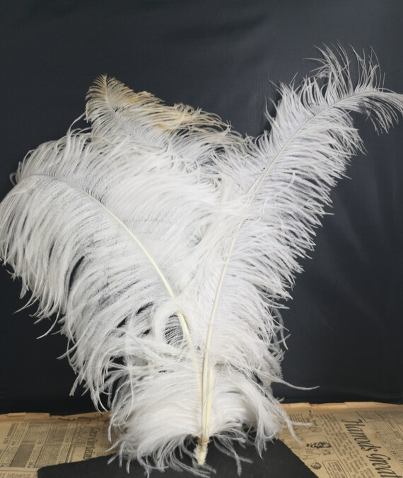 Antique Victorian ostrich feather plume, millinery, hat making