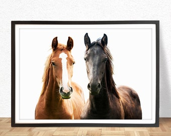 Horse Print,Horse wall art, Horse Color Photo, Modern Minimalist, Wall Art Photography, Digital Download, Home decorations, Horse decor