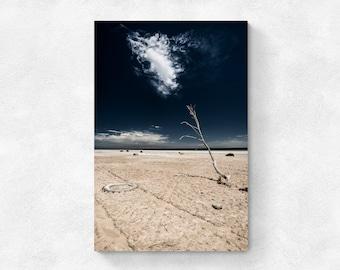 Salton Sea - Reaching for Water