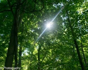 Sun Through the Trees - Digital Download