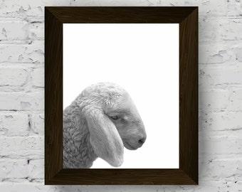 sheep poster, black white animal, animal photography, sheep wall art, farm animals, nursery decor, digital download, printable artwork